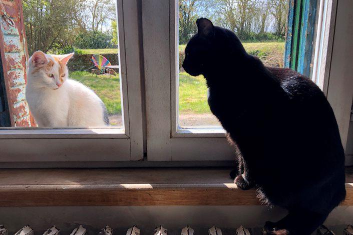 NAUČNICI: Mačke mogu da se zaraze, psi nisu osetljivi na koronu?